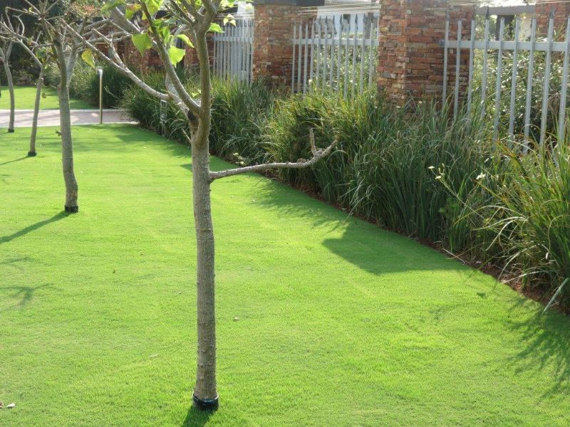 Monthly lawn care maintenance the grass company for Garden care maintenance